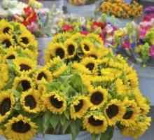 Quais são as boas flores para usina em maio?
