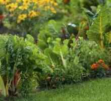 Como Horas de Sun Muitos Será uma horta precisa?
