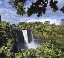 Plantas nativas em uma floresta tropical