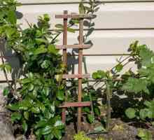 Plant Care para uma Jasmine