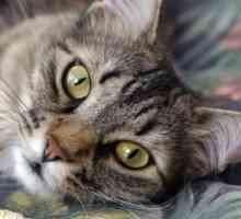 A melhor fonte de Omega 3 para gatos