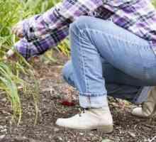 Como limpar botas de couro Clarks cera de abelha