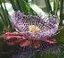 Que sementes crescem melhor Hydroponically?